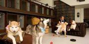 pension para perros en ciudad de mexico