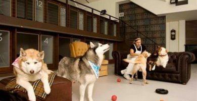 hotel canino pension canina de lujo