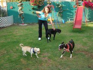 Servicios de pensiones para perros